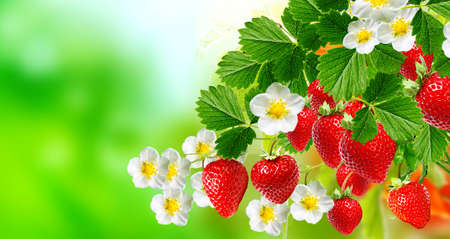 Tasty red strawberries