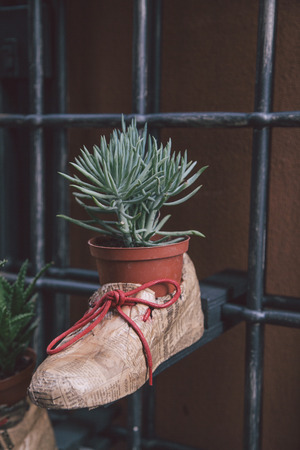 papiermache: plant in boot Stock Photo