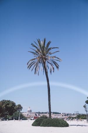 single palm tree in Rome