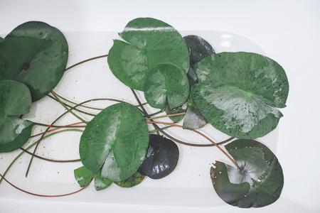lotus leaves in a bath