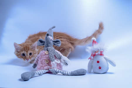red cat playing with toy rat and snowman