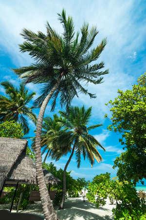 Tropical resort photo