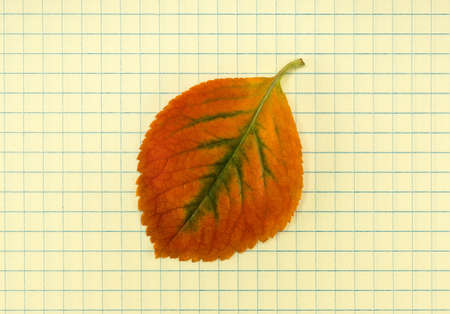 School notebook and frame of autumn leaves photo