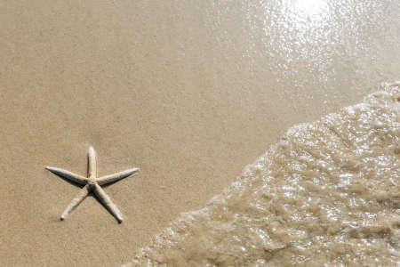 滑らかな砂の美しいビーチの背景に、ヒトデと波のオーバー ヘッド ビュー