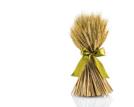 wheat isolated on white close up photo