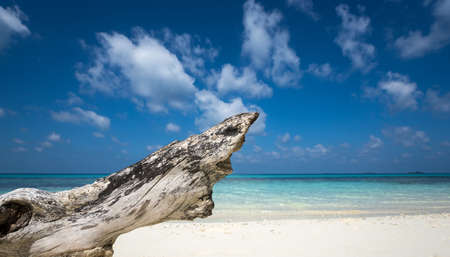 deadwood: Deadwood on white sand beach  of paradise island