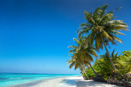 tropical plant: Perfect tropical island paradise beach