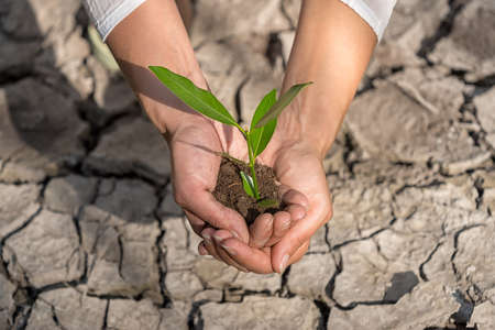 soil conservation: hands holding tree growing on cracked earth