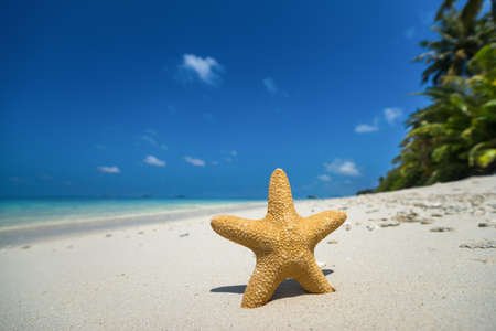 sand: Tropical beach with a starfish on sand, sea view and sand. Stock Photo