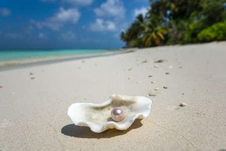 열대 모래 해변에 진주 오픈 쉘