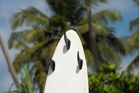 surfboards lays on the tropical beach Stock Photo