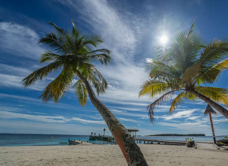 Palm tree on a tropical beach  Stock Photo