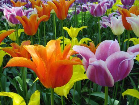 Flowers Stock Photo - 3110296