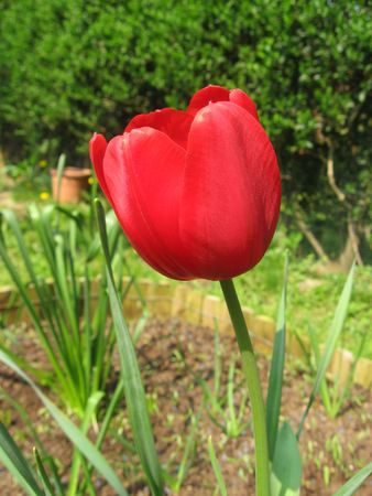 urbanization: Tulip Red