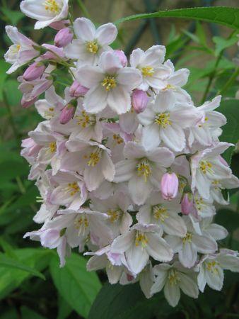 Flowers Stock Photo - 5032877