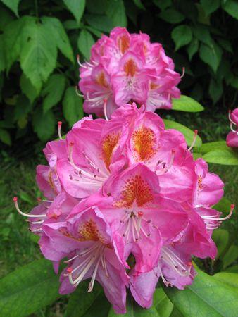 Flowers Stock Photo - 5090307
