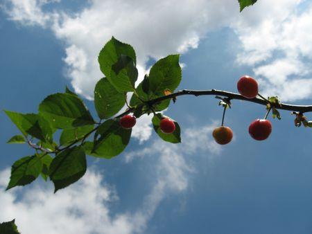 Cherry Stock Photo - 5090418