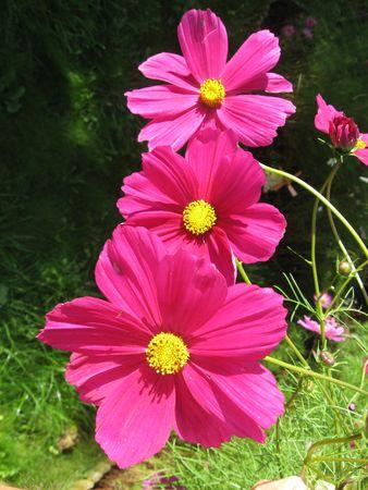 Spring Stock Photo - 6552447