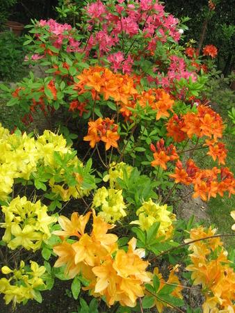 Azalea garden photo