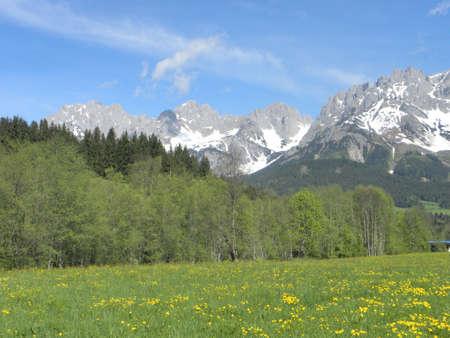 kaiser: alpine flowers with kaiser