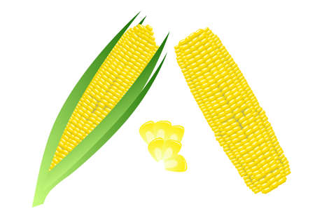 corn: Corn on the Cob Illustration