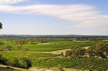barossa: Barossa Valley Vineyards in South Australia Stock Photo