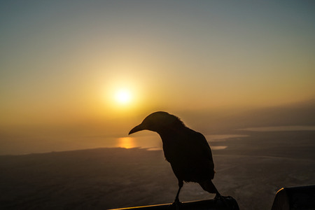 Raven silhouette is backlit by the Masada Fortress sunrise.
