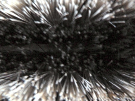 bristles: closeup of blurred black and white bristles Stock Photo