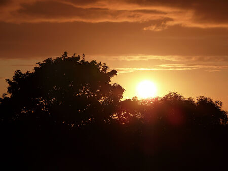 shadowed: Bright yellow sun setting behind hard shadowed trees Stock Photo