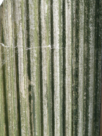 grooved: Grooved green wood on an old fence panel