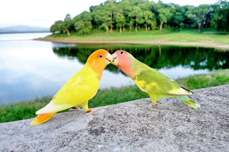 lovebird: Lovebird Stock Photo