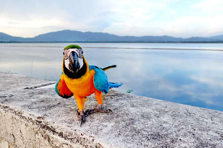 guacamaya: Guacamayo Parrot