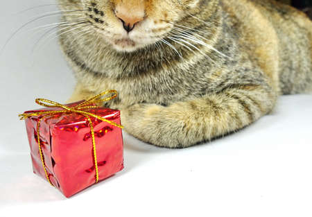 boxs: cat and red gift boxs