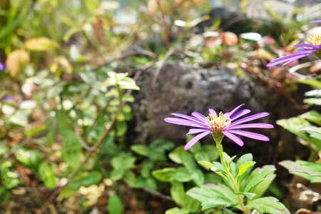 apocrita: purple wildflower.