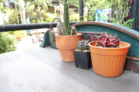 Cactus pots on table outdoor.