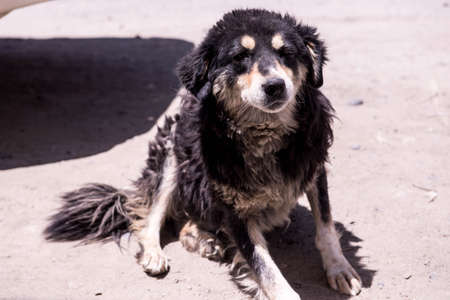 shaggy: Shaggy dog
