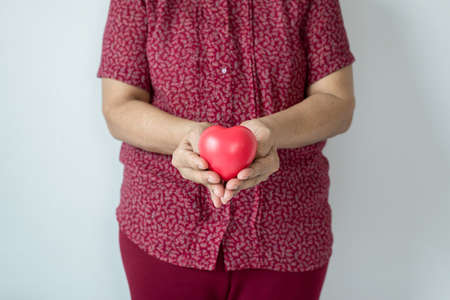 Red heart model on senior woman hands,Health Care and cardiology concept