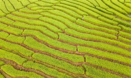 Beautiful aerial view scenery of rice terraces at Baan Pa Bong Piang,Chiang Mai province,Thailand Imagens