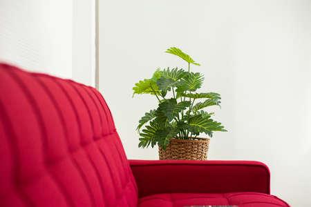 Fresh green leaf plant in pot in living room interior design at home Imagens