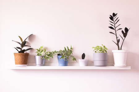 Beautiful house plants on shelf interior design of living room,Cozy home
