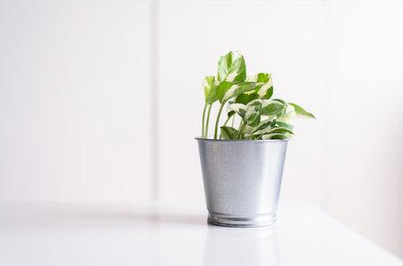 Beautiful house green plants on shelf interior design of living room,Cozy home