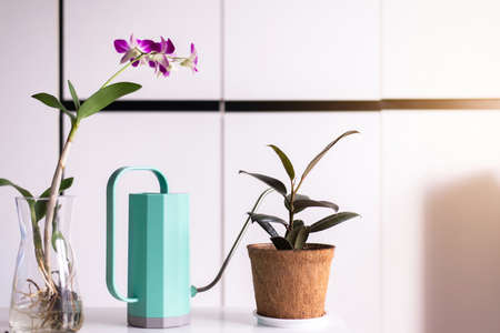 Green color of plastic watering can on table,Equipment for gardening Imagens