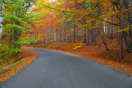gold road: Road in colorful forest