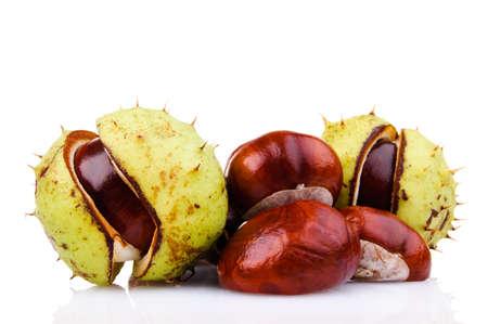 auburn: Chestnuts isolated on white