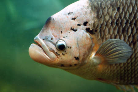 Close up of a fish head photo