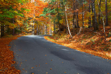 Road with trees during autumn