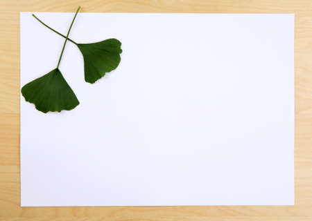 Ginkgo leaves on a blank frame photo
