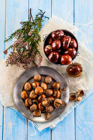 horse chestnut seed: Hazelnuts and chestnuts Stock Photo