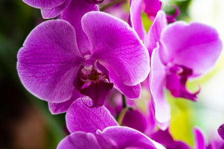 Purple orchid in garden