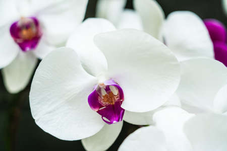 White orchid in garden